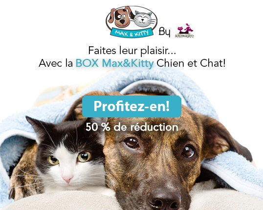 Logo Box Max&Kitty Chien et Chat sous une serviette