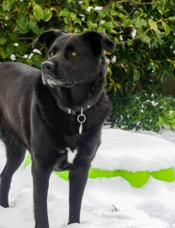 avatar ps Animaute.fr